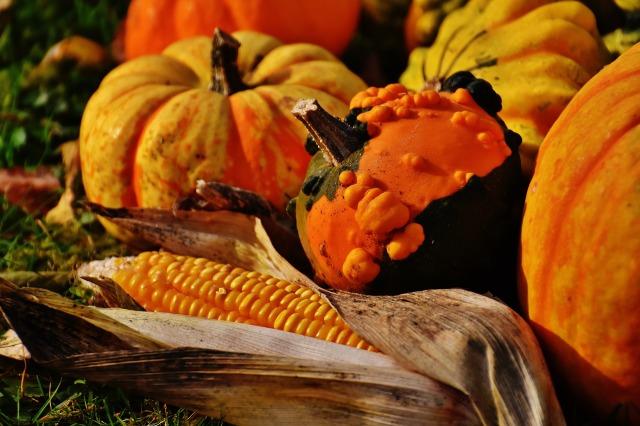 pumpkins-1708771_1920